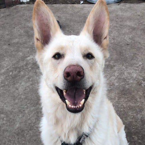 Dog Smile